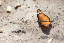Free Butterfly &x28;Lepidoptera&x29; Royalty Free Stock Photos - 22817738