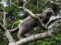 Free Grey Cat Climbing A Tree Royalty Free Stock Photography - 22824437