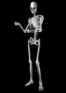 Free Skeleton . 4 Stock Image - 22821591