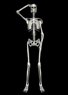 Free Skeleton . 9 Stock Photography - 22821612