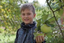 Smiling Boy Gathering Apples In The Garden Stock Images