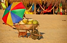 Free Fresh Coconuts For Sale At Mexican Beach Stock Images - 22828654