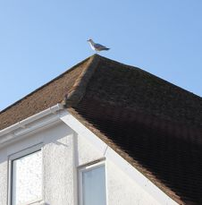 Free Lone Seagull Stock Photography - 22829612