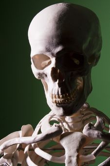 Free Sinister Skull In Half Shadow Stock Photography - 22834632