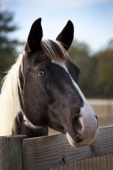 Free Old Blue Eye - Horse Portrait Stock Photography - 22837312