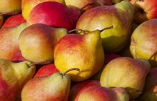 The Fruits Of Pear Tree Available For Sale. Royalty Free Stock Photos