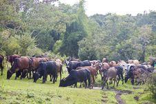 Free Water Buffalos Stock Images - 22842894