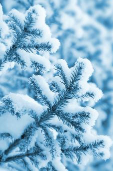 Free Winter Soft Background Stock Photography - 22845222