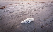 Free White Foam On The Sand And Decaying Algae Royalty Free Stock Image - 22851376