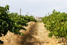 Vineyard Landscape With Villa Stock Photo