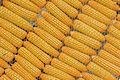 Free Few Yellow Corn Royalty Free Stock Photos - 22871748