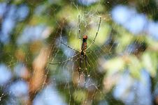 Free Giant Spider Stock Images - 22871644