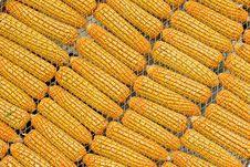 Free Few Yellow Corn Royalty Free Stock Photos - 22871748