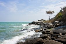 Free Stone Beach With Lonely Tall Tree Royalty Free Stock Image - 22877666
