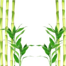 Free Bamboo Leaves Stock Image - 22880451