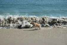 Free Wave Running Dog Stock Image - 22885521
