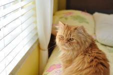 Free Orange Cat Royalty Free Stock Images - 22888409