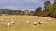 An English Rural Landscape With Grazing Sheep Royalty Free Stock Images