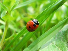 Free Ladybird Royalty Free Stock Photography - 22897867