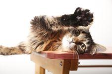 Free Cat Stock Photography - 22899152