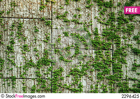 Block Wall Amp Vines Background Free Stock Images Amp Photos