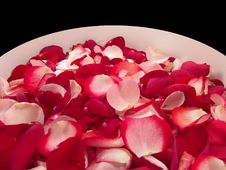 Free Rose Petals Royalty Free Stock Photos - 2291888