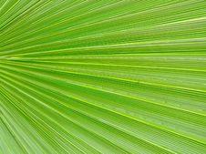 Free Green Leaf Stock Photo - 2292210