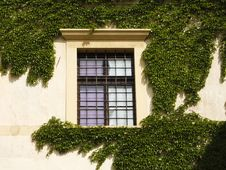 Free Ivy Window Royalty Free Stock Image - 2292346