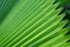 Free Palm Tree Leave3 Royalty Free Stock Photography - 2292367