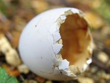 Free Eggshell Stock Photography - 2294502