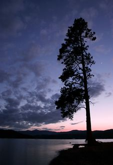 Free Silhouetted Tree At Dusk. Stock Photography - 2295742