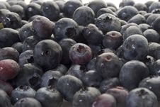 Free Blueberries Royalty Free Stock Photo - 2295785