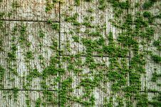 Block Wall & Vines Background Royalty Free Stock Photo