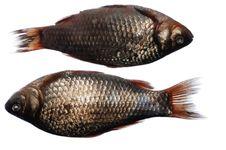 Free Two Crucian Fish Royalty Free Stock Image - 2297986
