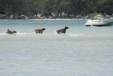 Free Sandbar Dogs! Royalty Free Stock Image - 2299576