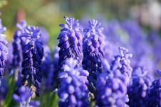 Free Gardening Stock Image - 2299671