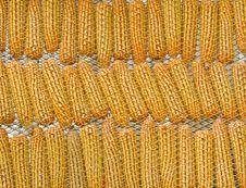 Free Few Yellow Corn Stock Photography - 22907392