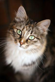 Free Cat Royalty Free Stock Photos - 22908608