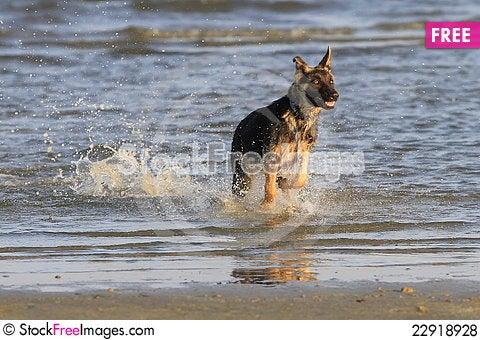 Free Dog At The Beach Royalty Free Stock Photos - 22918928