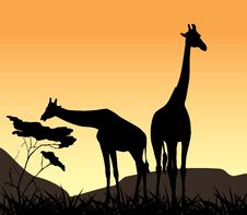 Free Two Giraffes On A Background Of Sunset Stock Images - 22910474