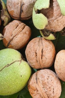 Free Fresh Walnuts Royalty Free Stock Photo - 22912745