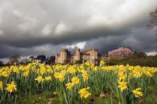 Free Daffodils Castle And Clouds Royalty Free Stock Photo - 22915395