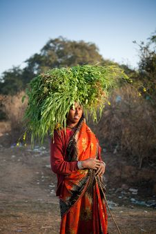 Free Indian Villager Woman Carrying Green Grass Stock Photo - 22917590