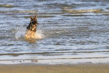 Free Dog At The Beach Stock Images - 22918874