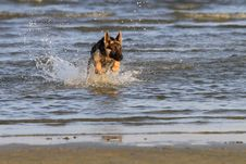 Free Dog At The Beach Royalty Free Stock Images - 22918889