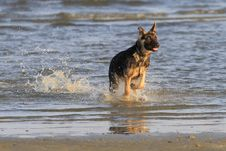 Free Dog At The Beach Royalty Free Stock Photos - 22918928