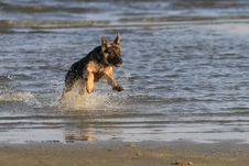 Free Dog At The Beach Royalty Free Stock Image - 22918946