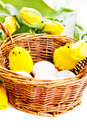 Free Chicks In Basket Royalty Free Stock Photo - 22928715