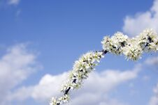Free White Flower Against Sky Stock Photography - 22920512