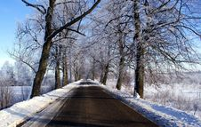 Free Trees In The Snow Stock Photography - 22929032